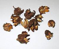 Сухоцвет Гибискус