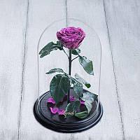 Роза в колбе Premium фиолетовая 830037
