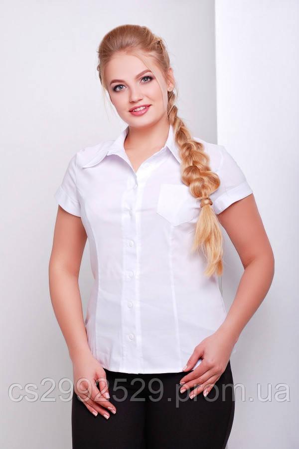 Блуза Марта-Б к/р белый
