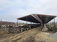 Будівництво ферм ВРХ, обори, кормові столи. с, фото 1