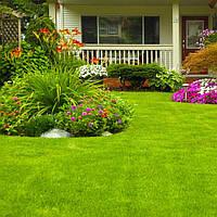 Как создать газон?