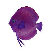 Декор для аквариума флуоресцентная рыбка Discus violet 9,5 см