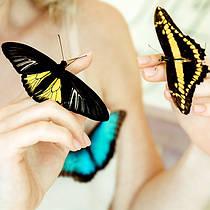 Выбрать живую тропическую бабочку