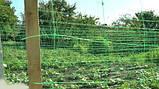 Сетка огуречная (шпалерная) 1.7м х 100м Венгрия, фото 3