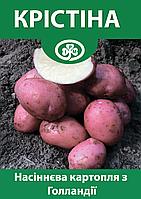 Семенной картофель Кристина, Голландия