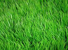 Газон Теневой  Парковый DLF Trifolium 100 г, фото 3