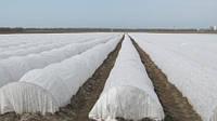 Агроволокно (укрывной материал, спанбонд) 30 г/м2 ширина 6.35м, фото 1