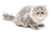 Шерсть кошки и кота: как справиться с проблемой, если у кошки выпадает шерсть?