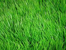 Газон Теневой  Парковый DLF Trifolium 20 кг, фото 3