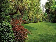 Газон Теневой  Парковый DLF Trifolium 20 кг, фото 2