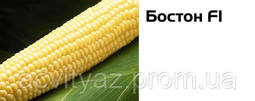 Семена сладкой (сахарной) кукурузы Бостон F1, 100 тыс. семян