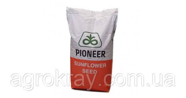 Насіння соняшника | П63ЛЕ113 (P63LE113) семена подсолнуха пионер pioneer