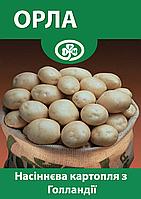 Семенной картофель Орла, Голландия