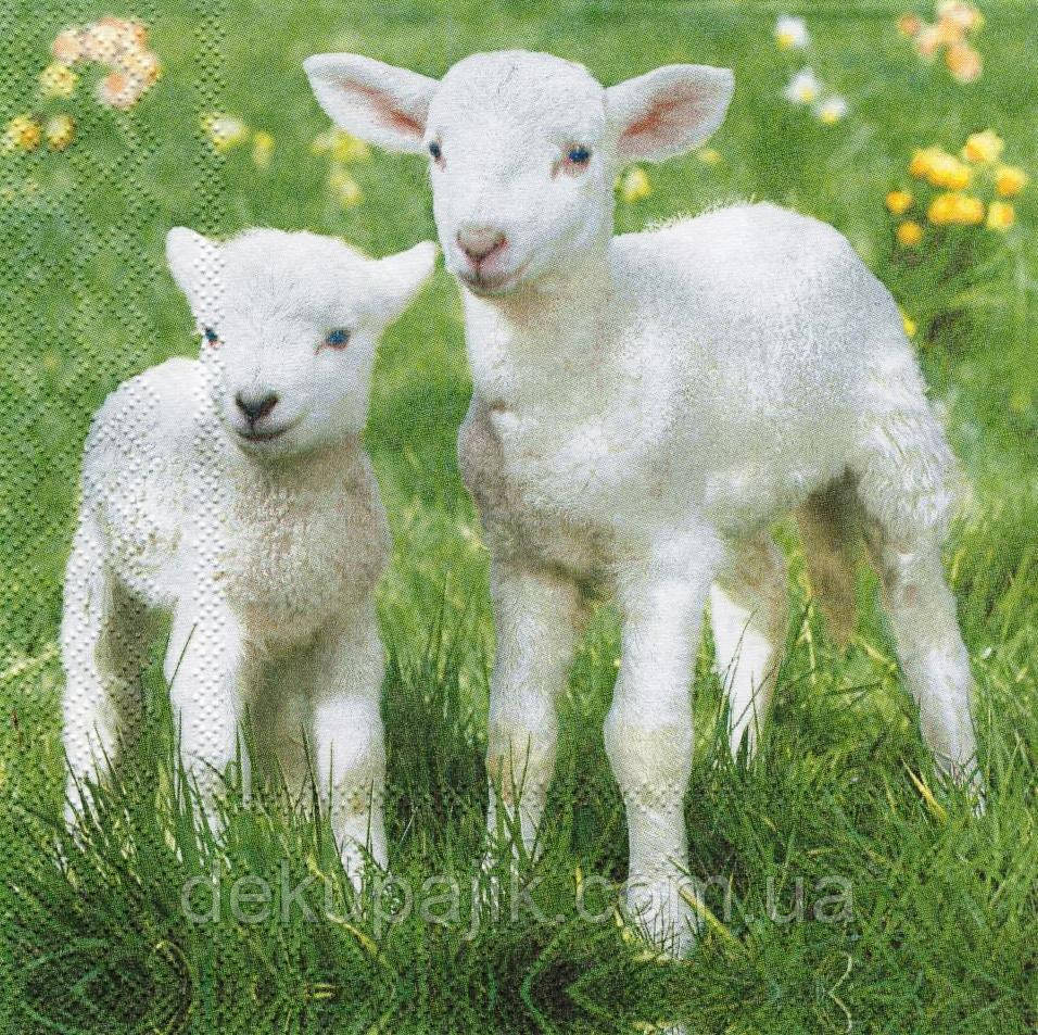 Салфетка декупажная Овцы 4598
