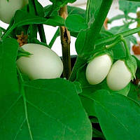 Баклажан декоративный Голден Эгс Професійне насіння 0.1 г