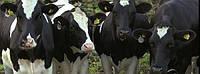 Страхування тварин у СК БРОКБІЗНЕС