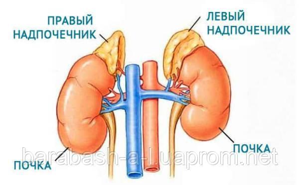 Картинки по запросу эндокринные заболевания