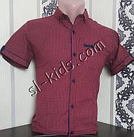 Стильная рубашка(шведка) для мальчика 12-16 лет (опт) (бордо) (пр. Турция)