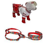 Комплект для собак в национальном украинском стиле Украинка ,готовое решение