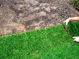Рулонный газон / Газонная трава в рулонах - 1кв.м., фото 3