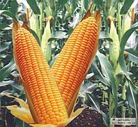 Технологія позакореневого підживлення кукурудзи  від Мінераліс
