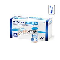 Вакцина Ла-Сота Ньюкасла ХИПРАВИАР-CLON Н120 1000 доз Hipra