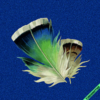 Термонаклейки на варежки и перчатки Перо [Свой размер и материалы в ассортименте], фото 1