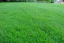 Газон Спортивный DLF Trifolium 20 кг, фото 2