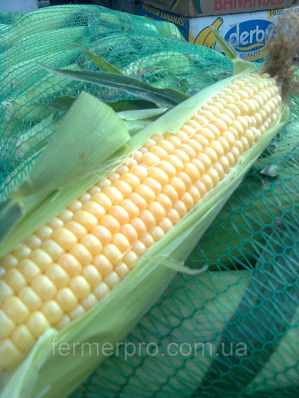 Семена кукурузы  Бостон F1 Syngenta 100000 семян