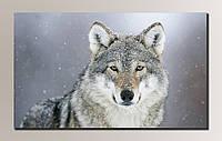 Фото картина на холсте Волк 90*54 см.