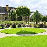 Ландшафтный дизайн. Озеленение. Благоустройство территории