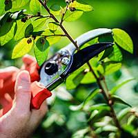 Обрезка деревьев, кустов, растений