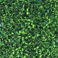 Декоративное модульное зеленое покрытие Engard САМШИТ МОЛОДОЙ 50х50 см