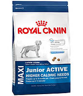 Royal Canin MAXI JUNIOR ACTIVE - корм для щенков крупных пород с высокими энергетическими потребностями 15кг.