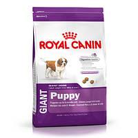 Royal Canin GIANT PUPPY корм для щенков от 2 до 8 месяцев 15кг.