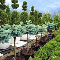 Посадка и уход за деревьями, кустарниками, растениями, многолетниками