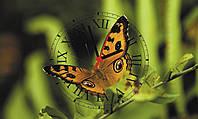 "Часы настенные стеклянные ""Бабочка Махаон"", фото 1"