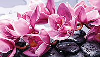 Фотообои 3D Орхидеи 254х184 см  : Цветы на камнях (1337.20958)