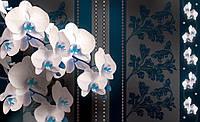 Фотообои 3D цветы 254х184 см  : Орхидеи синие (1301CN)