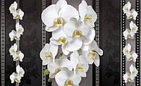 Фотообои 3D цветы флизелиновые 416х254 см  : Орхидеи и темный фон (1292CN)