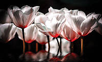 Фотообои 3D цветы 254х184 см  : Белые тюльпаны на воде (1102CN)