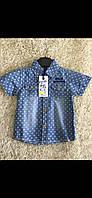 Котоновые рубашки для мальчиков S&D 1-5 лет