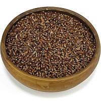 """Черная пшеница """"чернобровая"""""""