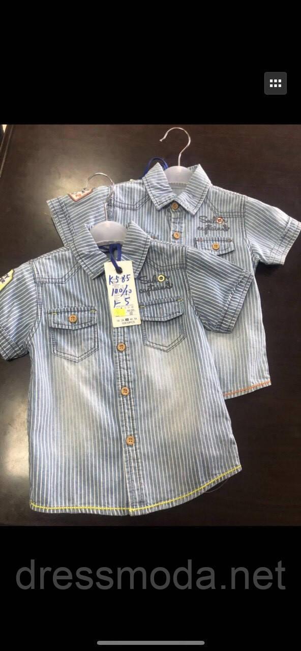 Котонові сорочки для хлопчиків S&D 1-5 років