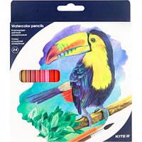 Карандаши цветные акварельные KITE Птицы, 24 цвета (K18-1050)
