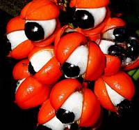 Бразильская гуарана (жидкий каштан)-150 грамм, фото 1