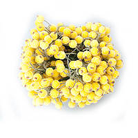 Калина в сахаре желтая