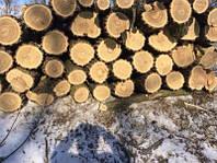 Дрова в метровках дуб,граб,береза,акация