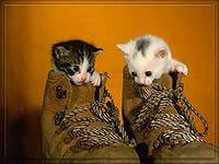 Уход за котятами.