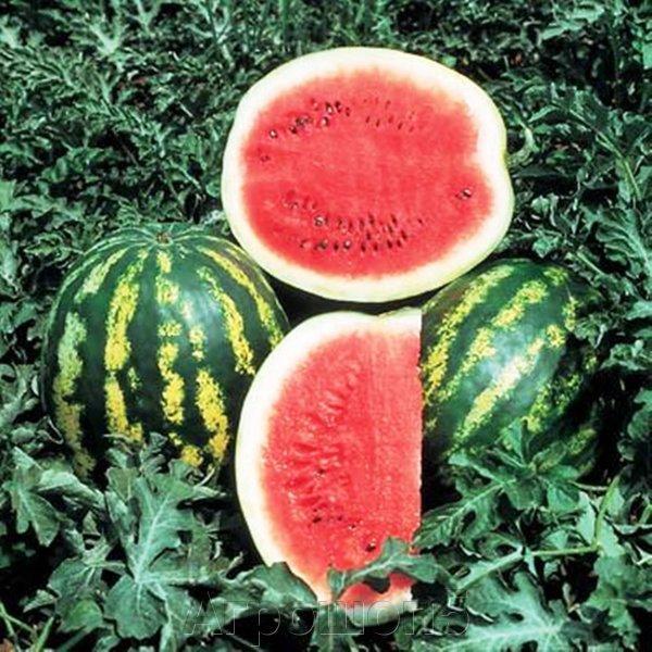 Семена арбуза Кримсон Свит 500 г (Hollar Seeds)